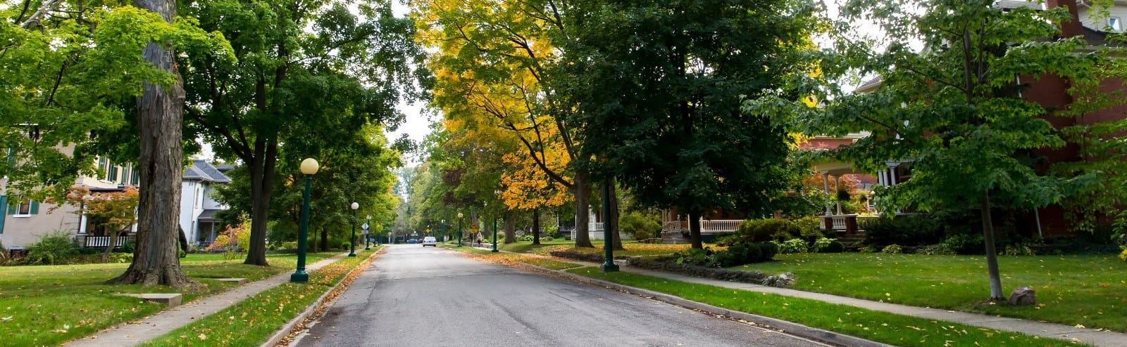 Tree-lined city street